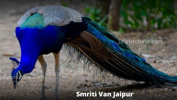 Smriti van Jaipur for couples