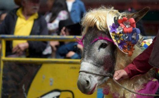 Donkey Fair and Festival Jaipur